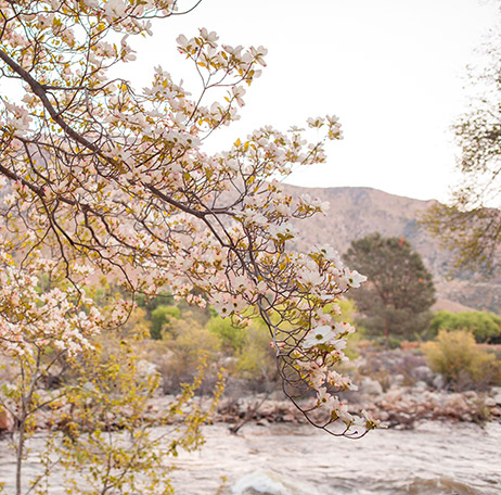 Lovely springtime view of dogwood trees at the Kern River House